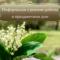 Информация о режиме работы интернет-магазина MAKomania.ru в праздничные дни.