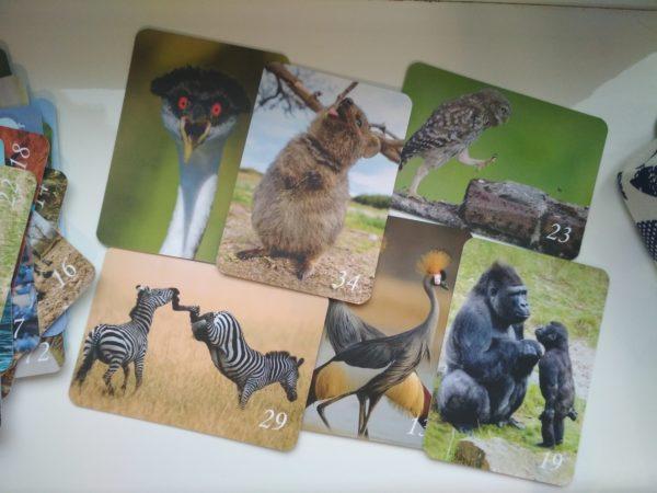 Из жизни животных, Макомания, метафорические карты, интернет-магазин МАК, купить МАК